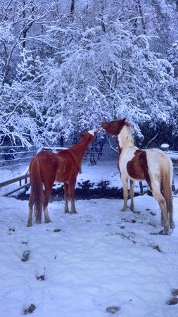 Horse Creek Stable Bed and Breakfast: Horses enjoying snowfall
