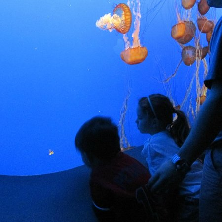 Monterey Bay Aquarium : Checking out the jelly fish