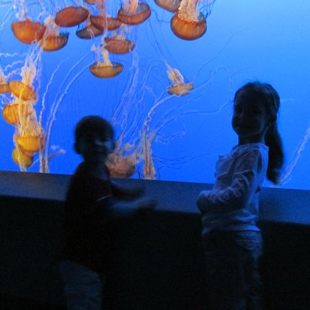 Monterey Bay Aquarium : The jelly fish area had this funny psychedelic CA groove to it