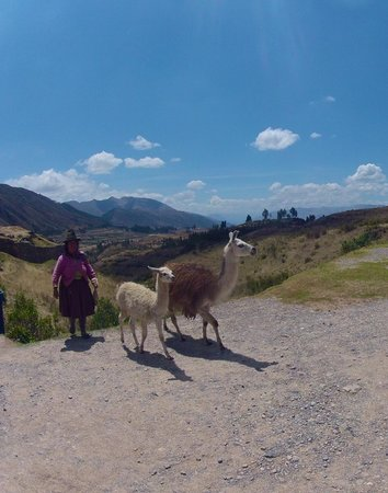 Alpaca Expeditions: Walking the dogs