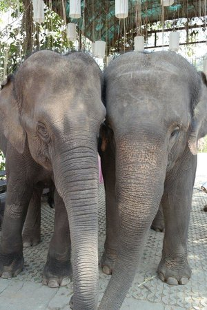 Thai Elephant Conservation Center : Simpatici