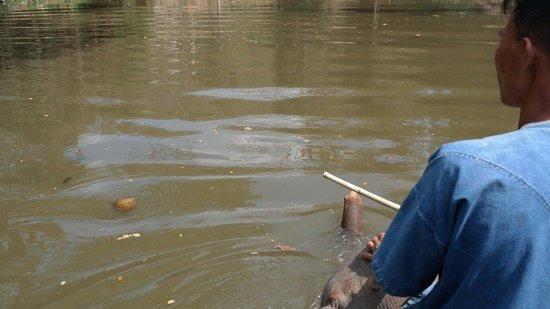Thai Elephant Conservation Center: Sotto l'acqua