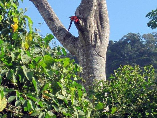 Rainforest Adventures: MACAW IN THE WILD