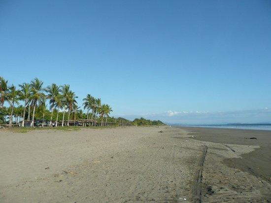 Finca Buena Vista: Menschenleerer Strand