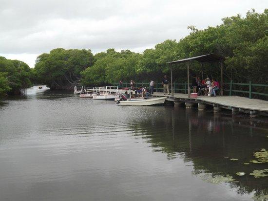 Laguna de la Restinga: Retorno