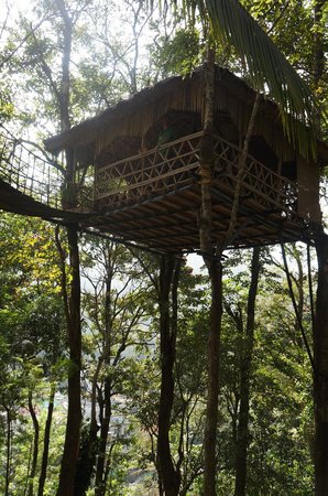 Greenwoods Resort: Treehouse cafe
