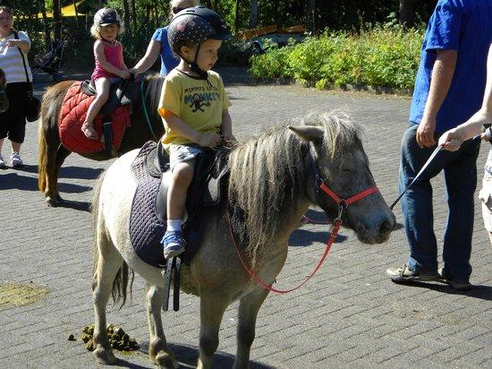 Center Parcs Park Eifel: pony rides for kids - my son LOVED it!