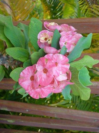 Residence Marifa : fleur