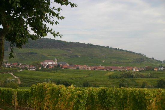 La Cour du Bailli Residence Hoteliere : The vineyards in the area