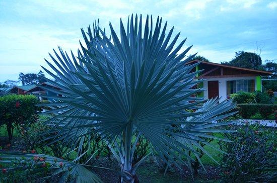 Hotel Villas Vilma: the garden