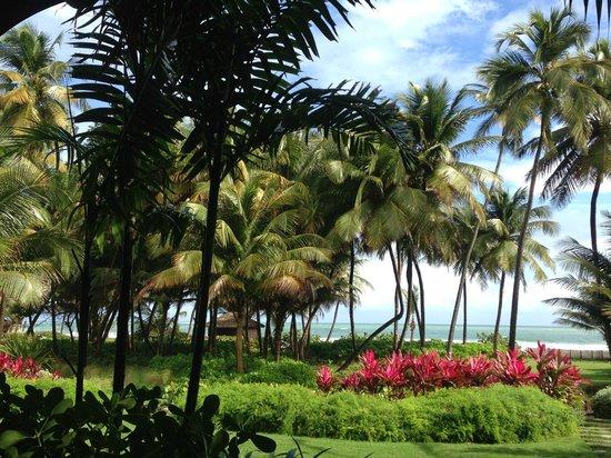 The St. Regis Bahia Beach Resort, Puerto Rico: Whisper of Trees