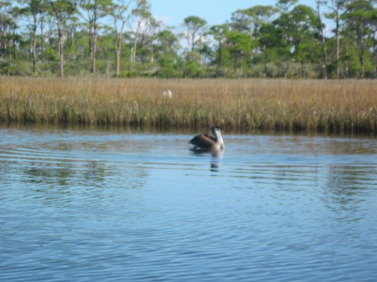 Cape San Blas Inn : Canoeing on the bay