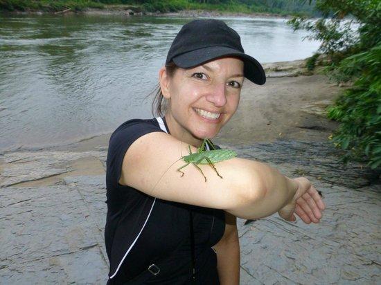 Jungle Lodge El Jardin Aleman: A giant grasshopper we found down by the river beach area