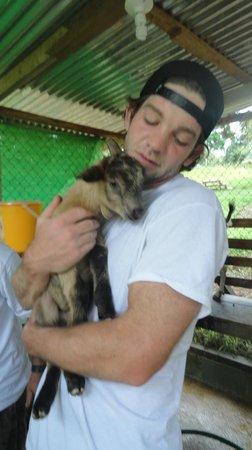 Finca Rio Perla: Milking The Goats