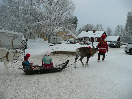 Arvidsjaur, Sweden: the reindeer raid