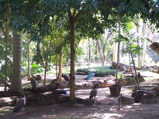 Bavaro Princess All Suites Resort, Spa & Casino: Paseo Ecologico