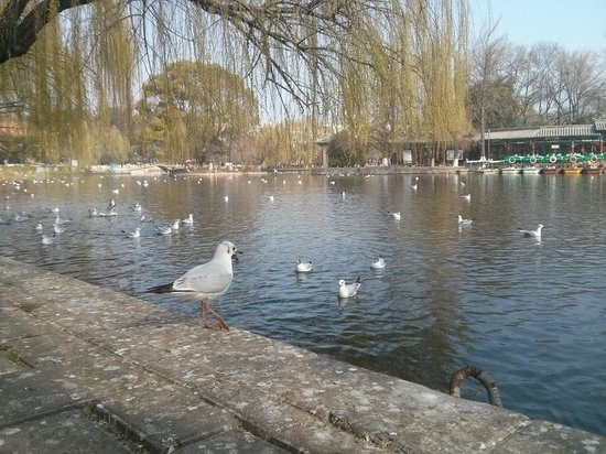 Green Lake (Cui Hu) : up, close and personal