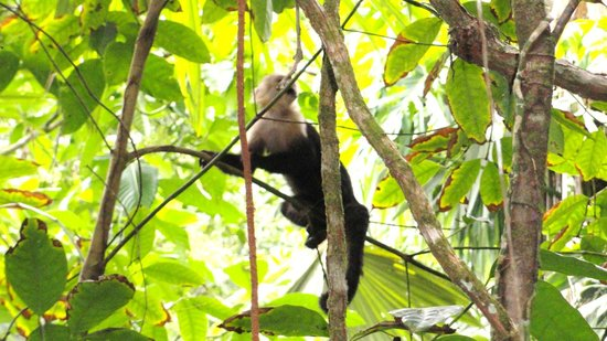 Casa Marbella: Up Close & Personal With Wild Monkeys In The National Park