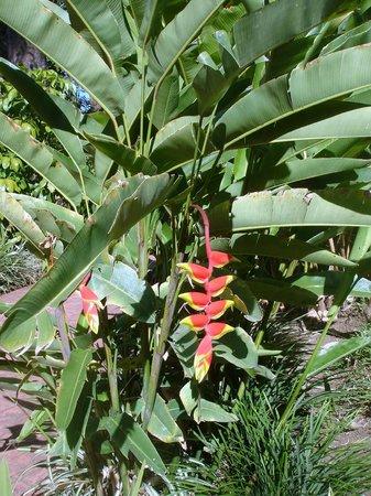 Barcelo San Jose: Gardens