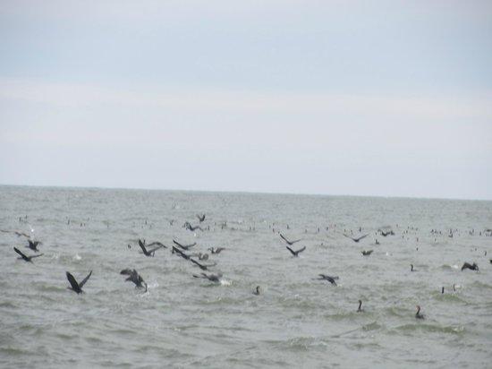 Captain Mike's Dolphin Tours : cormorants