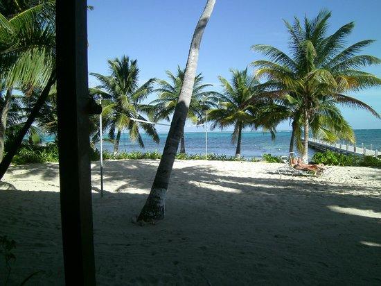 Ambergris caye picture of sundiver beach resort san pedro tripadvisor - Ambergris dive resort ...