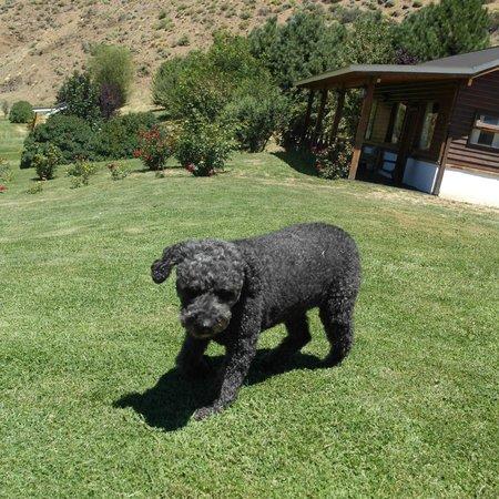 Lodge Nahuel Mapi: Oliva (mascota) a sus anchas.-