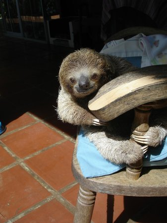 Toucan Rescue Ranch : Cooper the adorable baby sloth