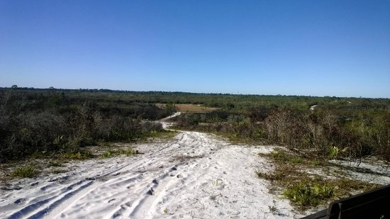 Haines City, Floride : Horse trail on the ridge at Catfish Creek