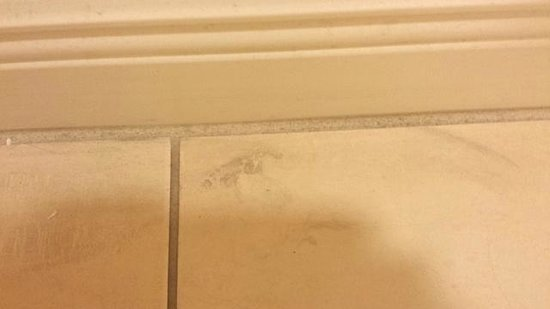 The Westin Cape Coral Resort At Marina Village : Another view of the dirty bathroom floor