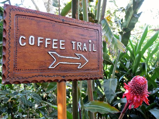 Hotel Buena Vista : Coffee trail.
