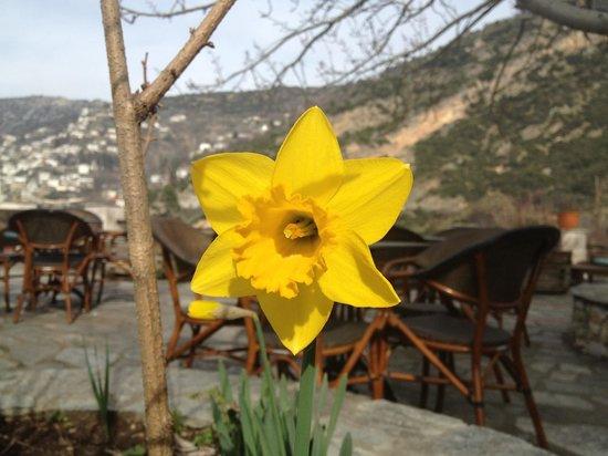 Aeriko: Ανοιξιάτικο λουλούδι ...