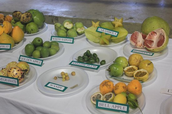 St. George Village Botanical Garden : An incredible variety of tropical fruits, some I never knew existed, are on display
