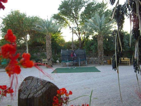 Botanical Garden Of Eilat : botanical gardens eilat 14