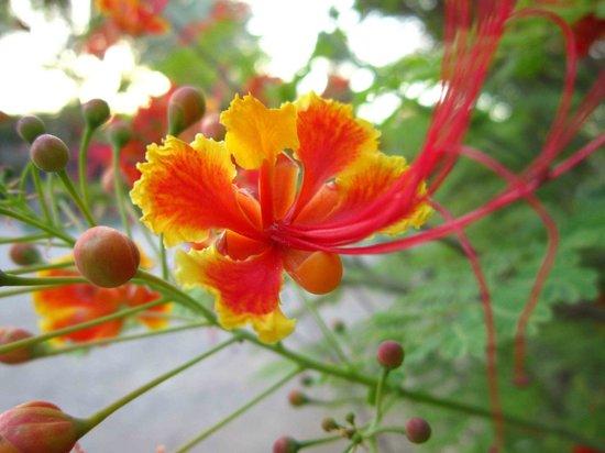 Botanical Garden Of Eilat : botanical gardens eilat 10