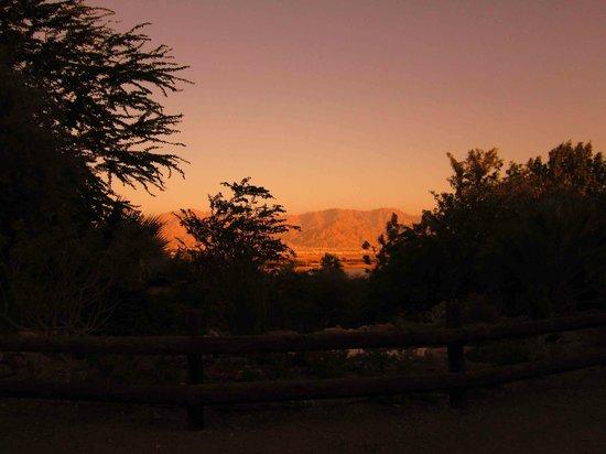 Botanical Garden Of Eilat : botanical gardens eilat 5