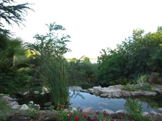 Botanical Garden Of Eilat : botanical gardens eilat 12