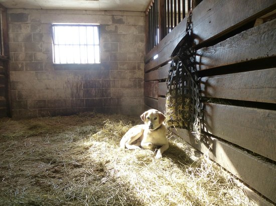 The Inn at Westwynd Farm : A sunny spot in the barn