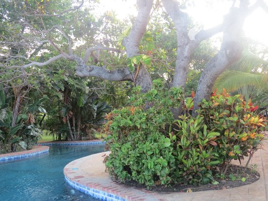 Dugong Mozambique - Inhassoro: Shrubs around the swimming pool