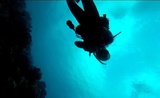 VIP Diving: Hanging out under water