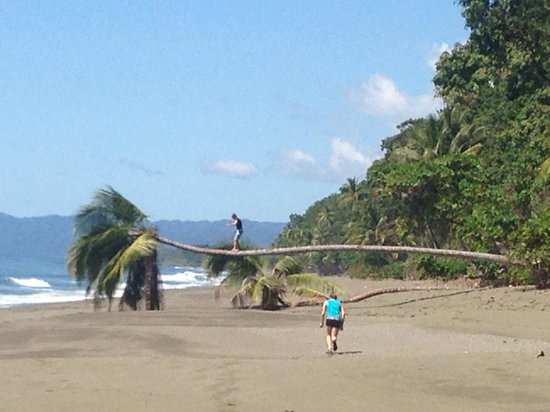 Lapa Rios Ecolodge Osa Peninsula: Beach at the end of the waterfall rappel