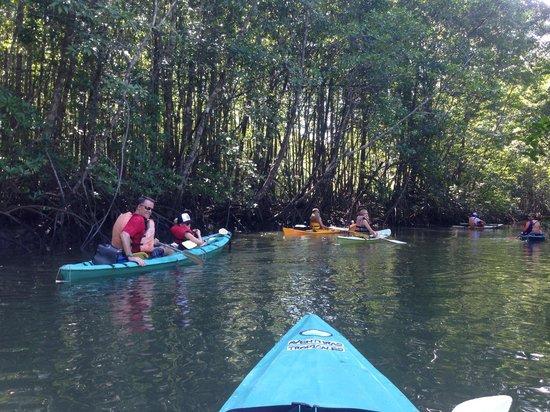 Lapa Rios Ecolodge Osa Peninsula: Mangrove your