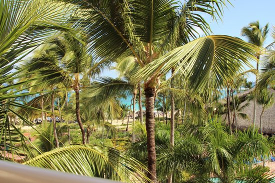 Barcelo Punta Cana: palm trees obstructing ocean view but still really nice!