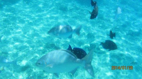 La Piscinita: Snorkel