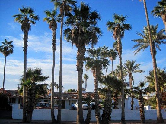 Coronado Motor Hotel-Yuma: Lots of palm trees makes for pretty landscaping