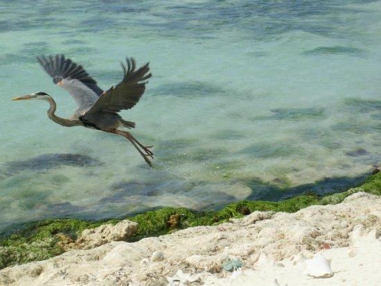 Posada Movida: Playa