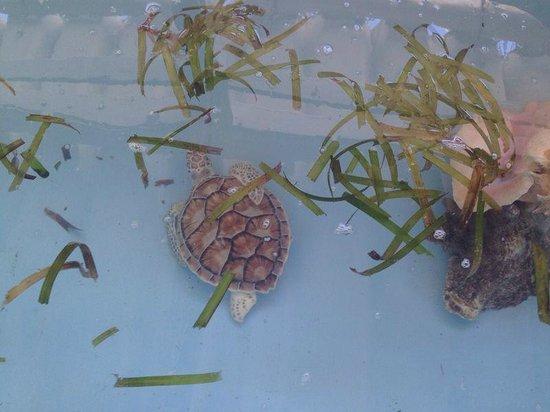 Posada Movida: Tortugas Marinas