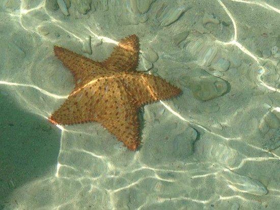 Posada Movida: Nadando con estrellas de mar