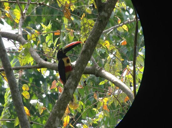 Manuel Antonio Expeditions: Toucan in the Park