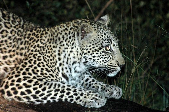 Idube Private Game Reserve Lodge : First game drive