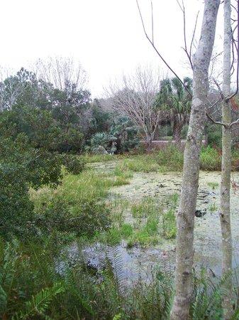Marshy Area Picture Of Florida Botanical Gardens Largo Tripadvisor